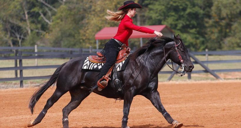 شرط بندی اسب سواری